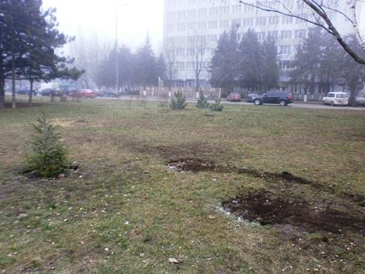 В Одессе на Черемушках браконьеры уничтожили посадку сосен, фото-1