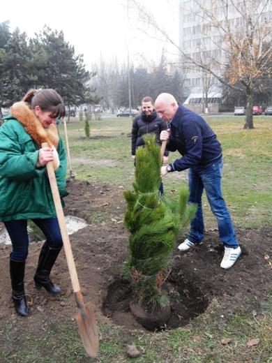 В Одессе на Черемушках браконьеры уничтожили посадку сосен, фото-4