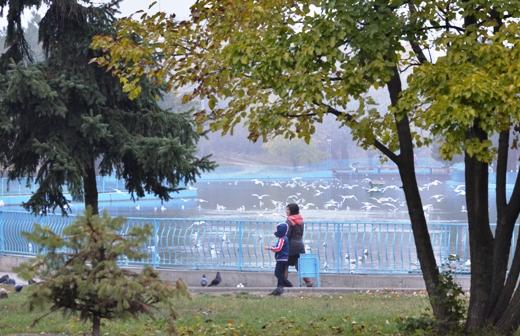 DSC_3418 Из одесских парков после уборки вывезли 200 тонн мусора