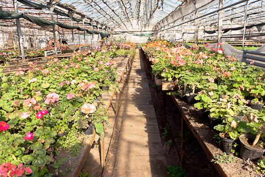 IMG_0074 Весной Одессу украсят 140 тысяч весенних цветов
