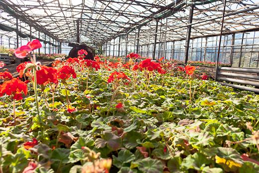 IMG_0075 Весной Одессу украсят 140 тысяч весенних цветов