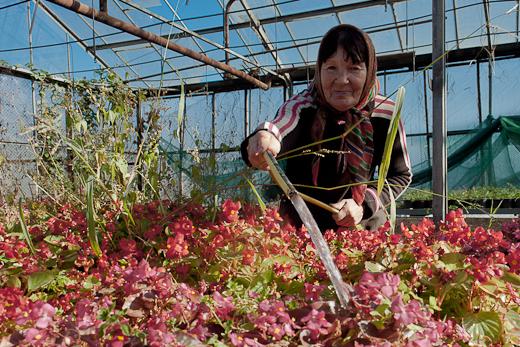 IMG_0082 Весной Одессу украсят 140 тысяч весенних цветов