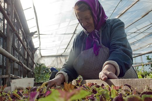 IMG_0097 Весной Одессу украсят 140 тысяч весенних цветов