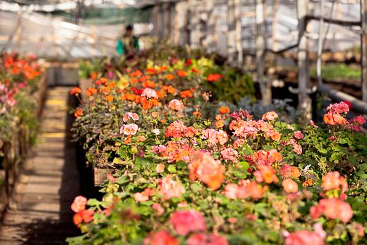 IMG_6372 Весной Одессу украсят 140 тысяч весенних цветов