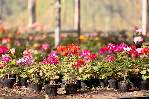 IMG_6374 Весной Одессу украсят 140 тысяч весенних цветов