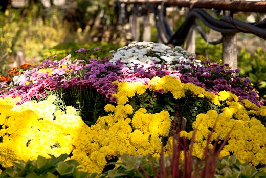 IMG_6380 Весной Одессу украсят 140 тысяч весенних цветов