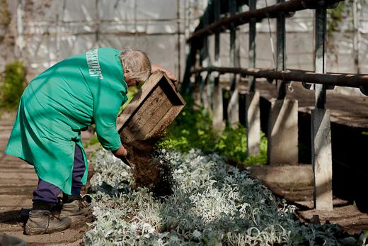 IMG_6385 Весной Одессу украсят 140 тысяч весенних цветов