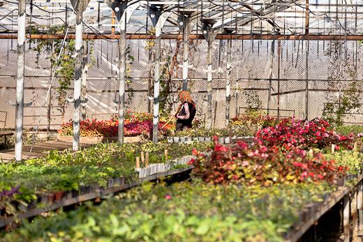 IMG_6407 Весной Одессу украсят 140 тысяч весенних цветов