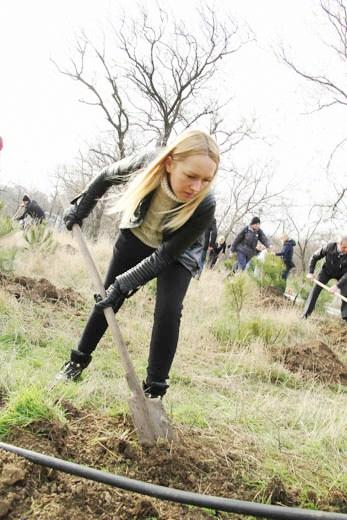 15 В Одессе на приморском склоне высадили сосновый бор