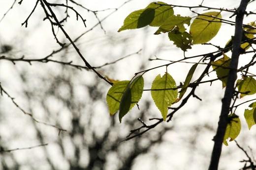 3 В Одессе на приморском склоне высадили сосновый бор