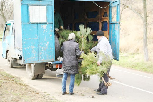 5 В Одессе на приморском склоне высадили сосновый бор