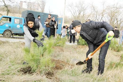 9 В Одессе на приморском склоне высадили сосновый бор