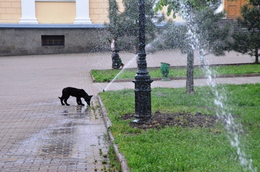 DSC_7513 В центре Одессы газон будет сам себя поливать