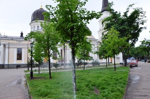 DSC_7516 В центре Одессы газон будет сам себя поливать