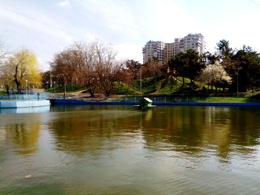 1 В одесском парке на озеро выпустили пару лебедей