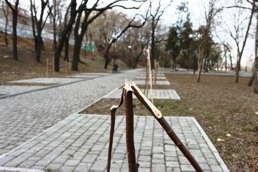 IMG_5477 Вандалы в Одессе снова уничтожили аллею лип в Лунном парке