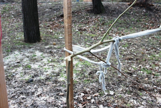 IMG_5478 Вандалы в Одессе снова уничтожили аллею лип в Лунном парке
