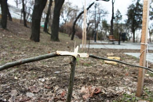 IMG_5479 Вандалы в Одессе снова уничтожили аллею лип в Лунном парке