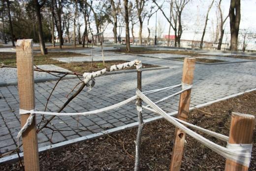 IMG_5481 Вандалы в Одессе снова уничтожили аллею лип в Лунном парке