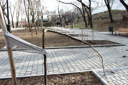 IMG_5482 Вандалы в Одессе снова уничтожили аллею лип в Лунном парке