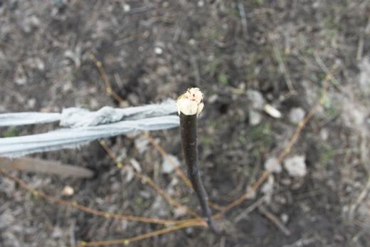 IMG_5483 Вандалы в Одессе снова уничтожили аллею лип в Лунном парке