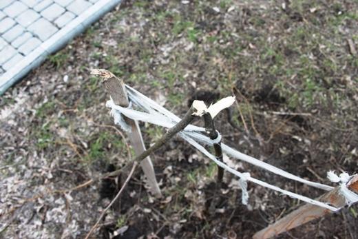 IMG_5485 Вандалы в Одессе снова уничтожили аллею лип в Лунном парке