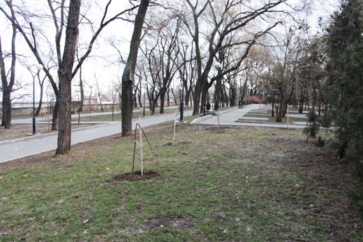 IMG_5490 Вандалы в Одессе снова уничтожили аллею лип в Лунном парке