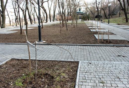 IMG_5492 Вандалы в Одессе снова уничтожили аллею лип в Лунном парке