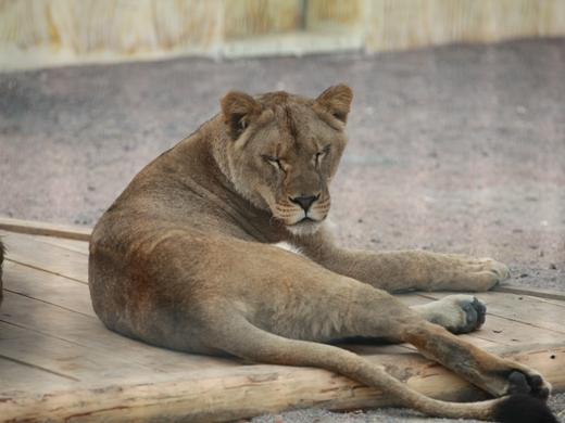 IMG_2635 Одесская мэрия отрекламировала частный зоопарк