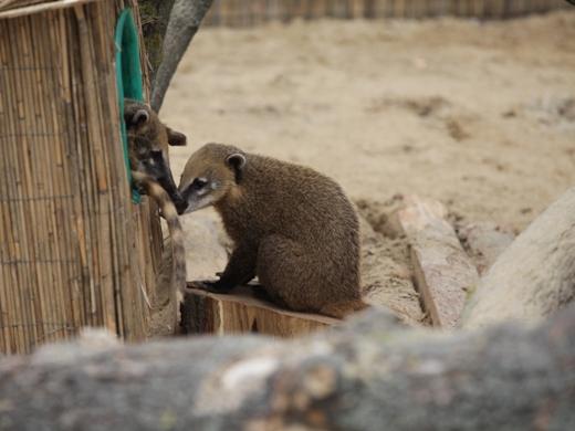 IMG_2665 Одесская мэрия отрекламировала частный зоопарк