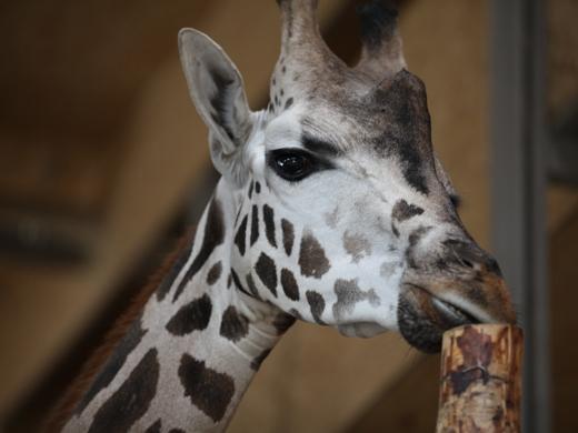 IMG_2674 Одесская мэрия отрекламировала частный зоопарк