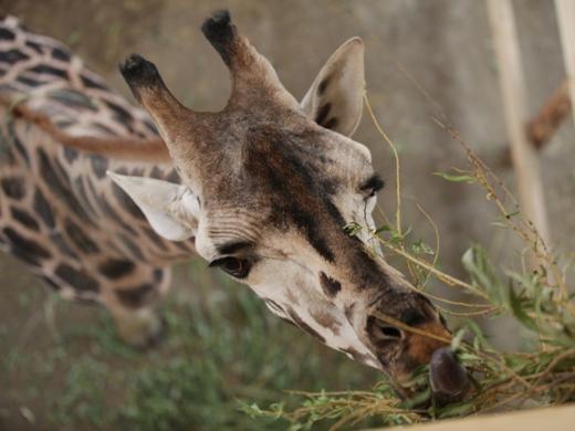 IMG_2680 Одесская мэрия отрекламировала частный зоопарк