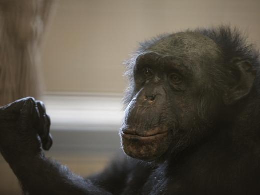 IMG_2704 Одесская мэрия отрекламировала частный зоопарк