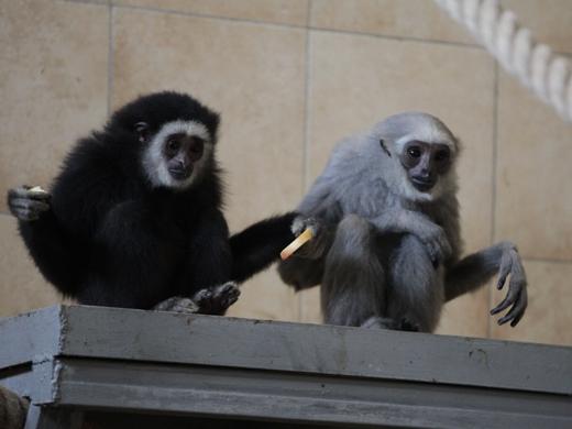 IMG_2721 Одесская мэрия отрекламировала частный зоопарк
