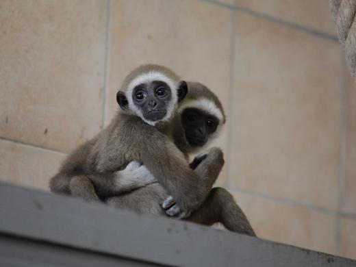 IMG_2723 Одесская мэрия отрекламировала частный зоопарк