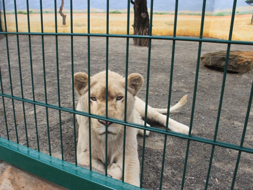 IMG_3949 Одесская мэрия отрекламировала частный зоопарк