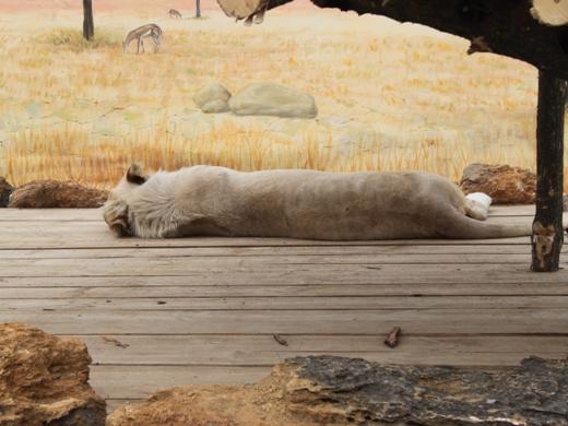 IMG_3955 Одесская мэрия отрекламировала частный зоопарк