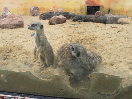 IMG_3998 Одесская мэрия отрекламировала частный зоопарк