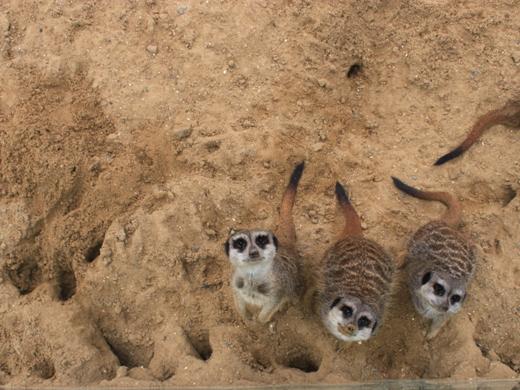 IMG_4003 Одесская мэрия отрекламировала частный зоопарк