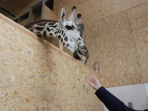 IMG_4023 Одесская мэрия отрекламировала частный зоопарк