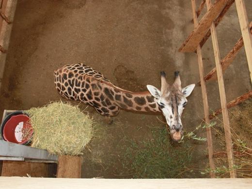 IMG_4026 Одесская мэрия отрекламировала частный зоопарк