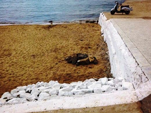 2 На одесском пляже появились львы