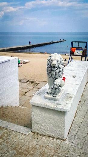 6 На одесском пляже появились львы