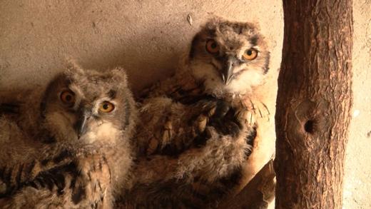 Sequence%2001.Still005 В одесском зоопарке самые мудрые и сердитые птицы привели потомство