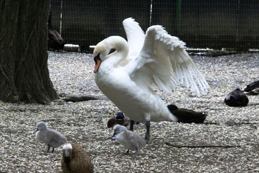 1 Четыре гадких утенка умиляют посетителей одесского зоопарка
