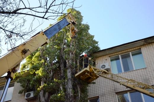 23 В Одессе продолжают ликвидировать последствия стихии
