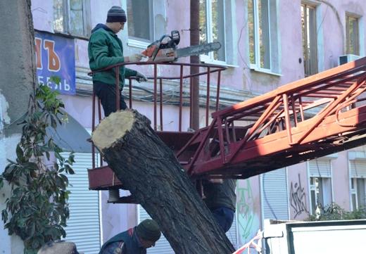 33 В Одессе продолжают ликвидировать последствия стихии
