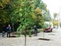 В Одессе продолжается высадка деревьев