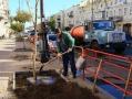 Около 1700 деревьев высадят в старой части Одессы до конца года