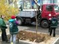 В Одессе продолжается осенняя высадка деревьев